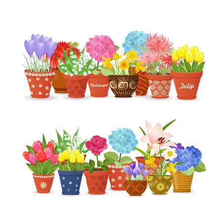 flowerpots: lovely collection different flowers planted in ceramic pots for your design.