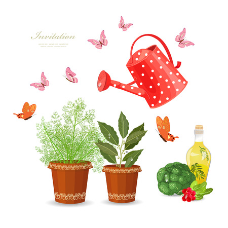 different herbs planted in flowerpots and fresh vegetables on white background with watering can