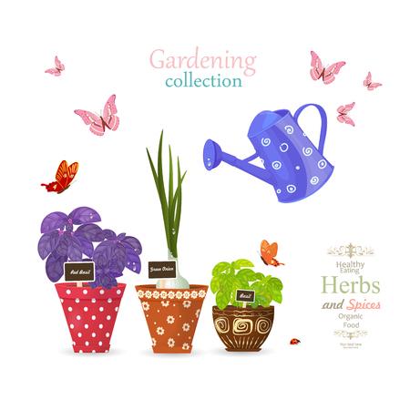 bannière de conception avec une collection d'herbes délicieuses plantées dans des pots de fleurs ethniques et des papillons volants