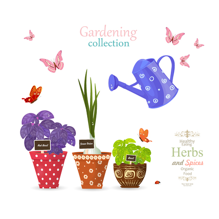 design banner with collection of delicious herbs planted in ethnic flowerpots and flying butterflies