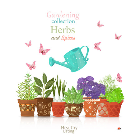 planted: design template with set of different herbs planted in ethnic flowerpots and flying butterflies