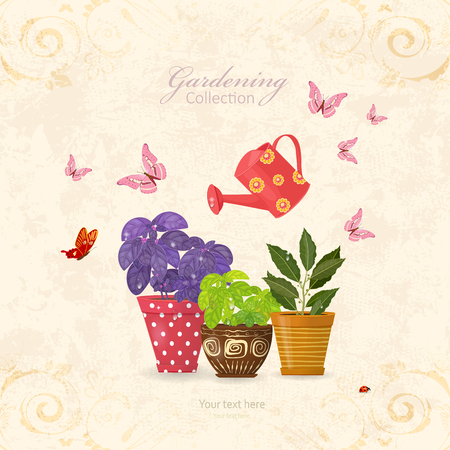 vintage card with collection of delicious herbs planted in ethnic flowerpots and watering can on grunge texture