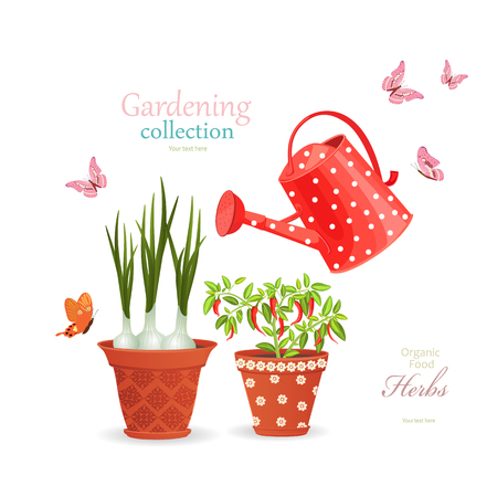 different herbs planted in flowerpots on white background with vintage watering can for your design