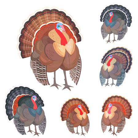 Collection of wild turkeys for your design