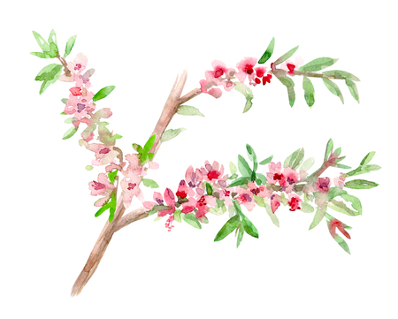illustration of almond blossom flowering twig. watercolor painting Stock Photo