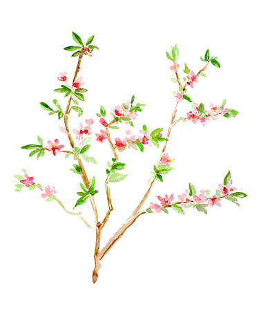 almond blossom flowering twig. watercolor painting