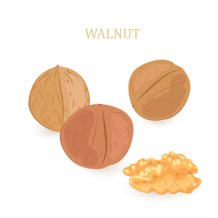 collection of walnuts for your design