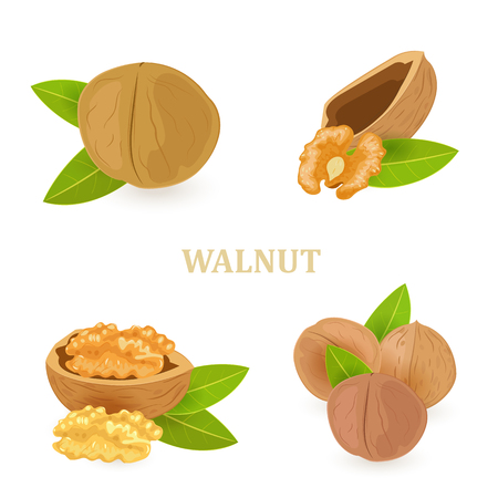 collection of groups of walnuts with green leaves for your design