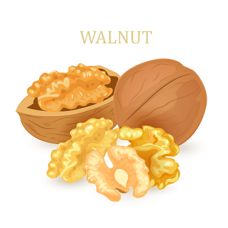 group of walnuts for your design Vectores