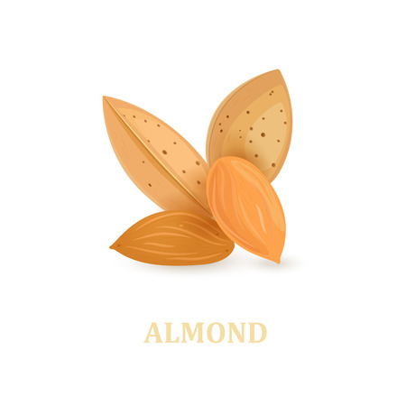 group of almonds on white background for your design Illustration