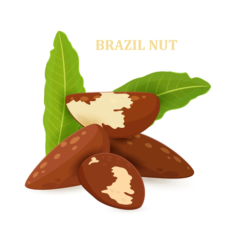 pile of brazil nuts with leaves for your design