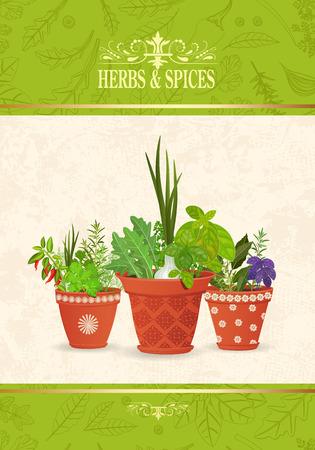 Baner z różnymi ziołami i przyprawami sadzonymi w ceramicznych doniczkach