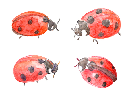 collection of funny ladybugs. watercolor painting