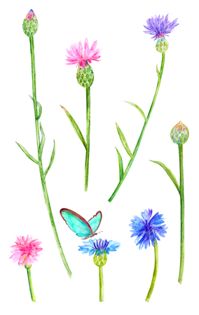 collection of meadow flowers. cornflowers. watercolor painting