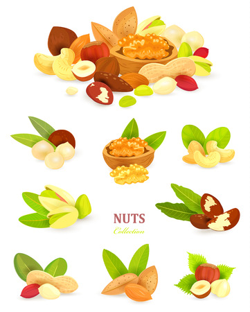 collection of colorful nuts on white background your design Stock Illustratie