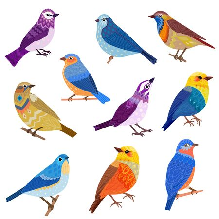 Lovely collection fancy birds for your design