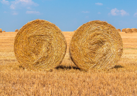 filed: Hay bales on the field Stock Photo