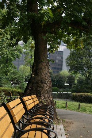 孤独な公園のベンチ、晴れた日に行