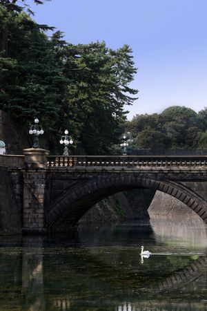 A lovely swan swims peacfully under the bridge at the Japanese Imperial Palace inner moat in Tokyo