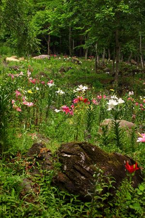 a sea of colorful flowers grows in a wild forest