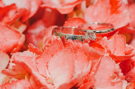 wedding bands: Wedding Bands in Coral Petals Stock Photo