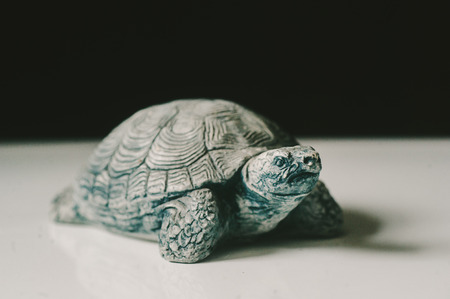 Volcanic Ash Turtle