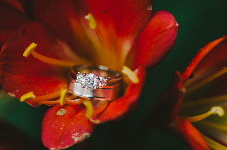 Wedding Rings in Red Hawaiian Tropical Flower Stock Photo