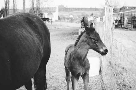 Baby Horse in Black  White