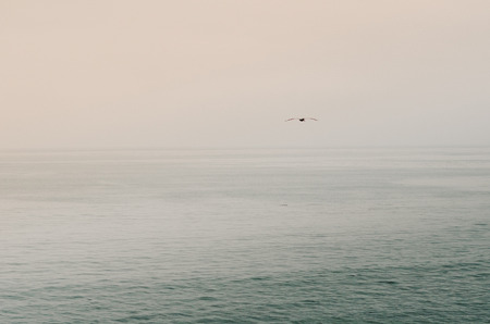Lone Sea Gull Flying Over Ocean