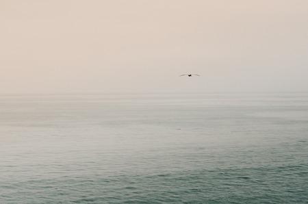 sea gull: Lone Sea Gull Flying Over Ocean