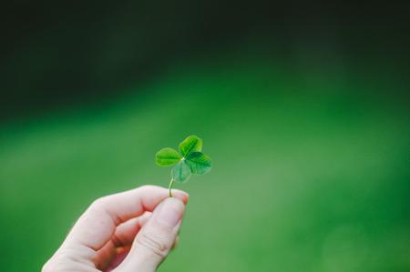 lucky clover: Lucky Four Leaf Clover
