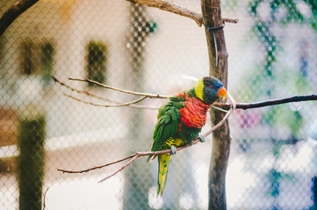 Lorikeet on Branch Stock Photo