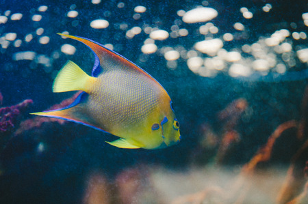 neon fish: Neon Yellow Fish