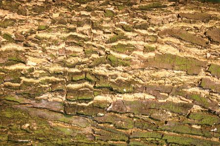 Closeup of a tree bark texture