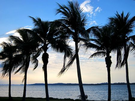 Coconut palms on sand beach during sunset
