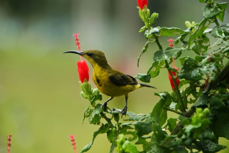 Hummingbird standing on a plant with red flower