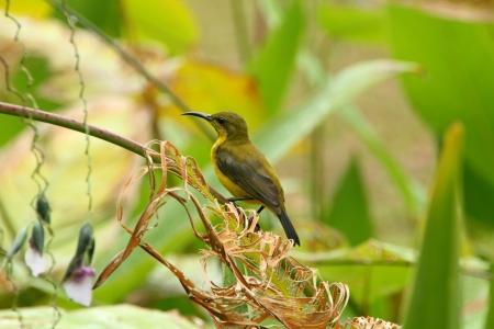 Hummingbird resting on a dry leaf