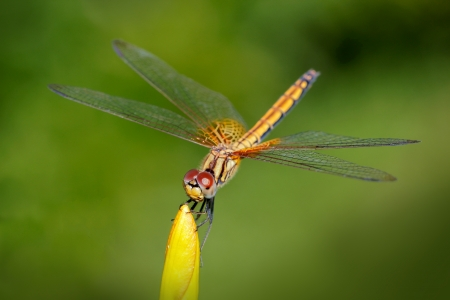 Dragonfly outdoor in a garden