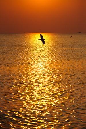 reflexion: Reflexi�n de la luz de la puesta del sol.