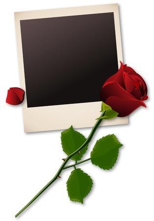 polaroid: polaroid image avec une rose rouge