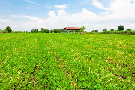 Countryside View of Crops Growing  photo