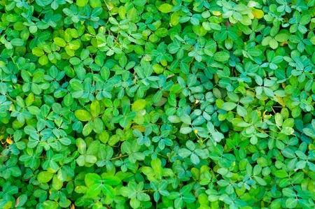 leafs: green leafs background