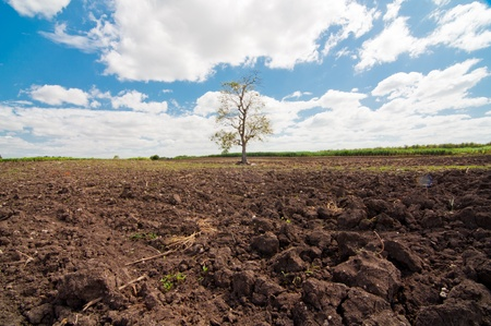 plough land: Countryside View of Crops Growing