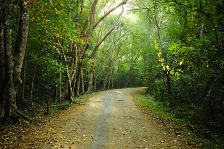 deep south: Country road running through the deciduous forest