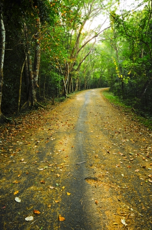 Country road running through the deciduous forest   photo