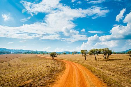 arboles secos: Camino de Savannah Campo