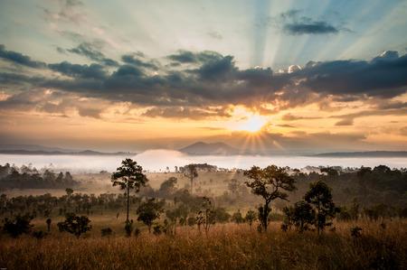kruger: sunrise in savanah meadow