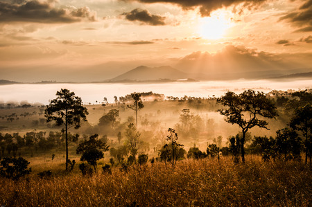chobe national park: sunrise in savanah meadow