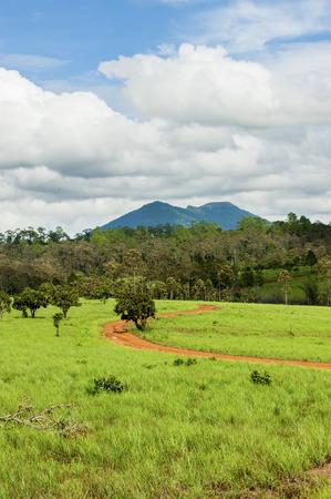 savanna: Road of savanna Field in green season.