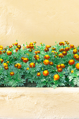 heads old building facade: Orange Wall and colorful Flowers Stock Photo